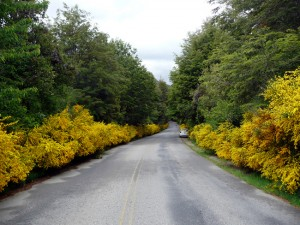 Estrada na Patagônia Andina