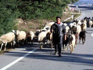 Um pastor com suas ovelhas, em Portugal, Serra da Estrela
