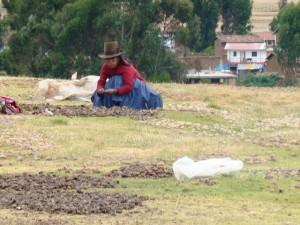Índia cultivando batatas em Chinchero, vale Sagrado dos Incas, Peru