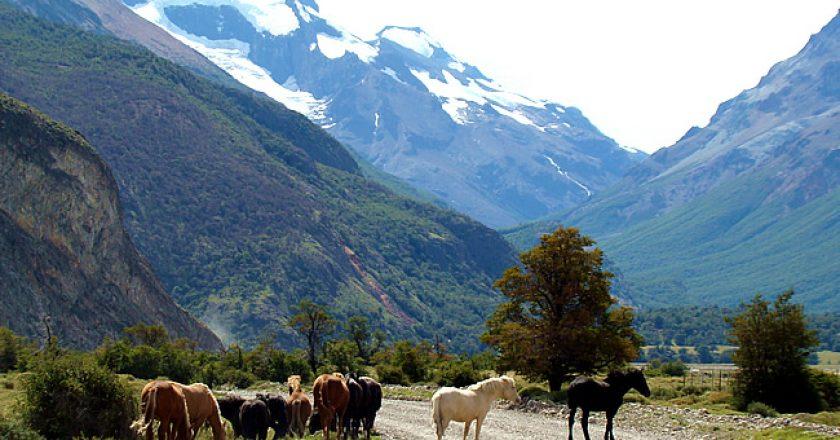 Cavalos na pista em El Chaltén, Argentina